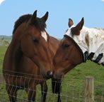 cropped-horse.jpg